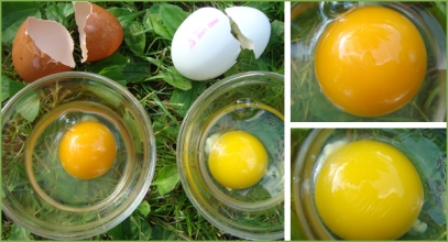 food_egg_collage